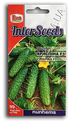 Насіння огірка Кріспіна F1 10 насінин, фото 2