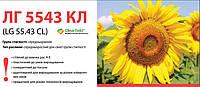 Семена подсолнечника (Лимагрейн) LG 5543 CL