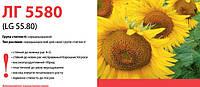 Семена подсолнечника (Лимагрейн) LG 5580 остаток 2015 г.