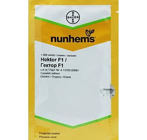 Гектор F1 семена огурца, 1000 семян - пчелоопыляемый, (40-44 дня) Nunhems, фото 2