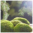 KNÄCKA Свеча ароматическая в стекле/3 фитили, Сосна и дубовый мох, фото 2