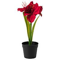 FEJKA Искусственное растение в горшке, Амариллис красный
