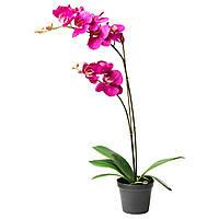 FEJKA Искусственное растение в горшке, Орхидея темно-сиреневый