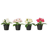 FEJKA Искусственное растение в горшке, Роза разные цвета