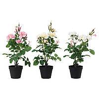 FEJKA Искусственное растение в горшке, Роза различные растения