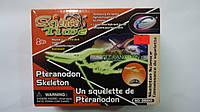"Игрушка-конструктор ""Скелет Птеранодон"", в коробке 170*135*60мм,Science Time.Трехмерная головоломка-конструкто"