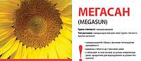 Семена подсолнечника (Лимагрейн) Megasun остаток 2015 г.