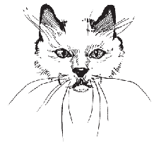 Карл Лагерфельд присвятив своїй кішці капсулу Monster Choupette