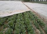 Агроволокно Agreen 19 г/м2 1.6м * 100м, фото 4
