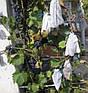 Агроволокно Agreen 50 г/м2 6.35м * 100м, фото 4