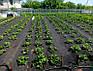 Агроволокно чёрное Agrol 50 г/м2 3.2м х 10м, фото 2