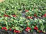 Агроволокно чорне Agrol 60 г/м2 3.2 м х 10м, фото 5