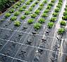 Агроволокно чорне Premium-Agro P-42 г/м2 1.6х100м, фото 2