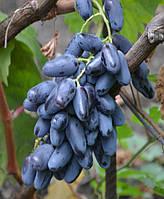 Саженцы винограда Ромбик (привитые)