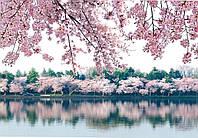 Фотообои *Престиж* № 8 Сакуры(136х196)
