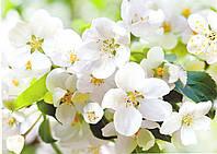 Фотообои *Престиж* № 10 Цветущая яблоня (196х272)