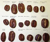 Как выбрать кофе в зернах: советы и рекомендации