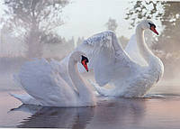 Фотообои *Престиж* № 27 Лебеди (196х272)