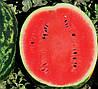 ЛИВИЯ F1 - семена арбуза, 1 000 семян, CLAUSE