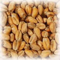 Солод пивоваренный пшеничный светлый Chateau Wheat Blanc (Шато Вит Блан) 25кг