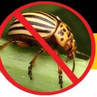Инсектициды для защиты от вредителей