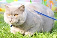 Особенности питания кастрированных котов и стерилизованных кошек