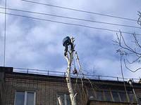 Работа на деревьях с спец. инструментом-минимальный заказ