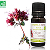Эфирное масло Душицы карликовой (Орегано) BIO (Origanum compactum)