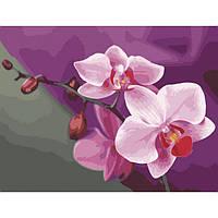 Картина по номерам на холсте Розовые орхидеи 40*50см, КН2057