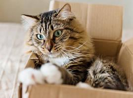 Почему кошек тянет в коробки
