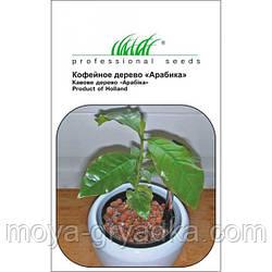 Кімнатна рослина Кавове дерево Арабіка, 1г