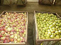 Яблоки зимних сортов. Магазин, сушка, соки