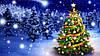 : Спешите! У нас – большое поступление новогодних елок.