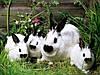 Роды у кроликов