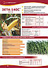 """Кремнисто-подобный гибрид кукурузы """"Зета 140 С"""""""