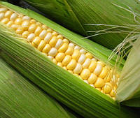 Семена кукурузы SG29N68, Seed Grain Company