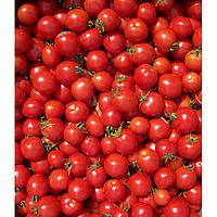Томат Конори F1 Kitano Seeds 1000 семян