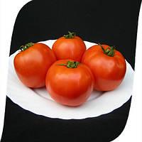 Томат Таня F1/ Tanya F1 Seminis 1000 семян