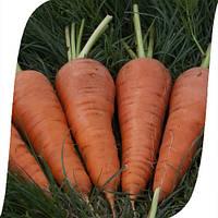 Морковь Санта Круз F1/ Santa Cruz F1 Seminis 1 млн семян