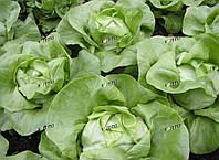 Салат Цитрин SEMO 5000 семян