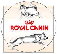 Корм для собак и кошек Роял Канин. История брэнда и его преимущества.