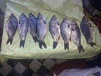 Предварительно рыба была засолена на 12 часов