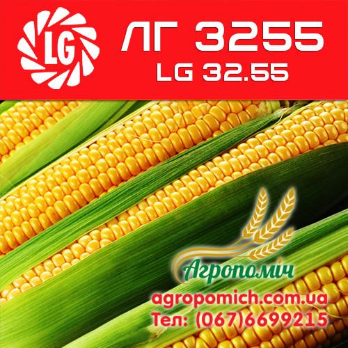 Кукуруза ЛГ 3255 (LG 32.55)