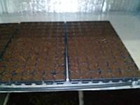 Кокосовый субстрат  для касет 5кг, фото 1