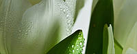 Плитка облицовочная Tulip Maxi 1 W , фото 1