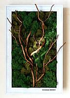 Фитокартина из стабилизированного мха (ягель) с корягой, в деревянной рамке