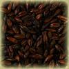 Солод специальный пивоваренный темный Chateau Chocolate (Шато Шоколад) 25кг