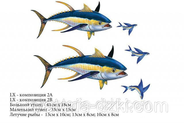 Большой тунец 41см и летучие рыбы. Композиция из 5 рыб.