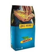 Посевной материал кукурузы Monsanto DK 4590 ФАО 360