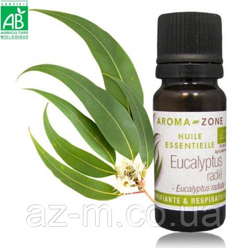 Эвкалипт лучистый (Eucalyptus radiata) BIO эфирное масло